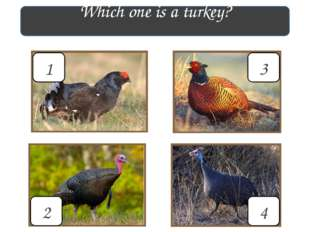 Which one is a turkey? 3 4 2 1