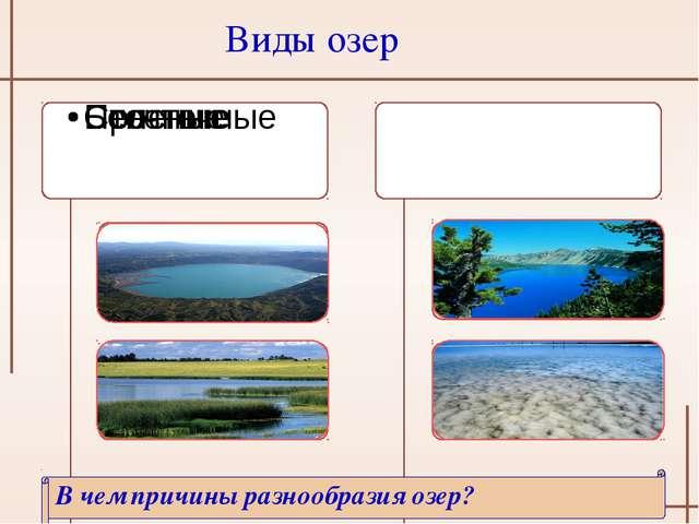 Виды озер В чем причины разнообразия озер?