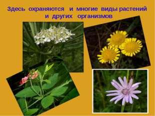 Здесь охраняются и многие виды растений и других организмов