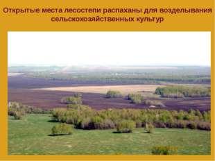 Открытые места лесостепи распаханы для возделывания сельскохозяйственных куль