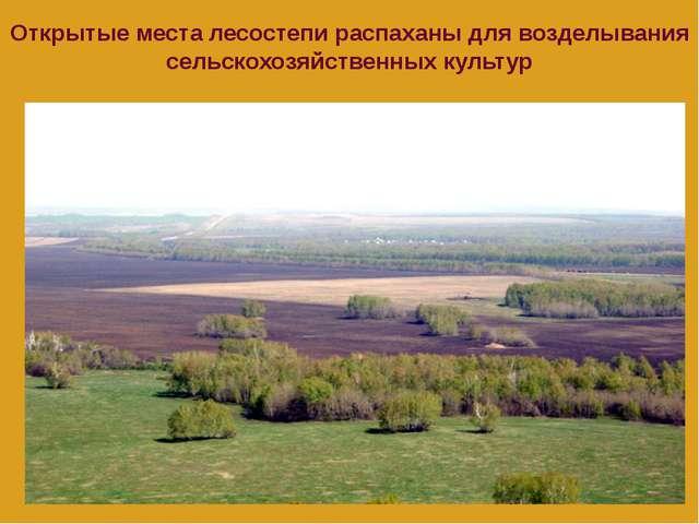 Открытые места лесостепи распаханы для возделывания сельскохозяйственных куль...