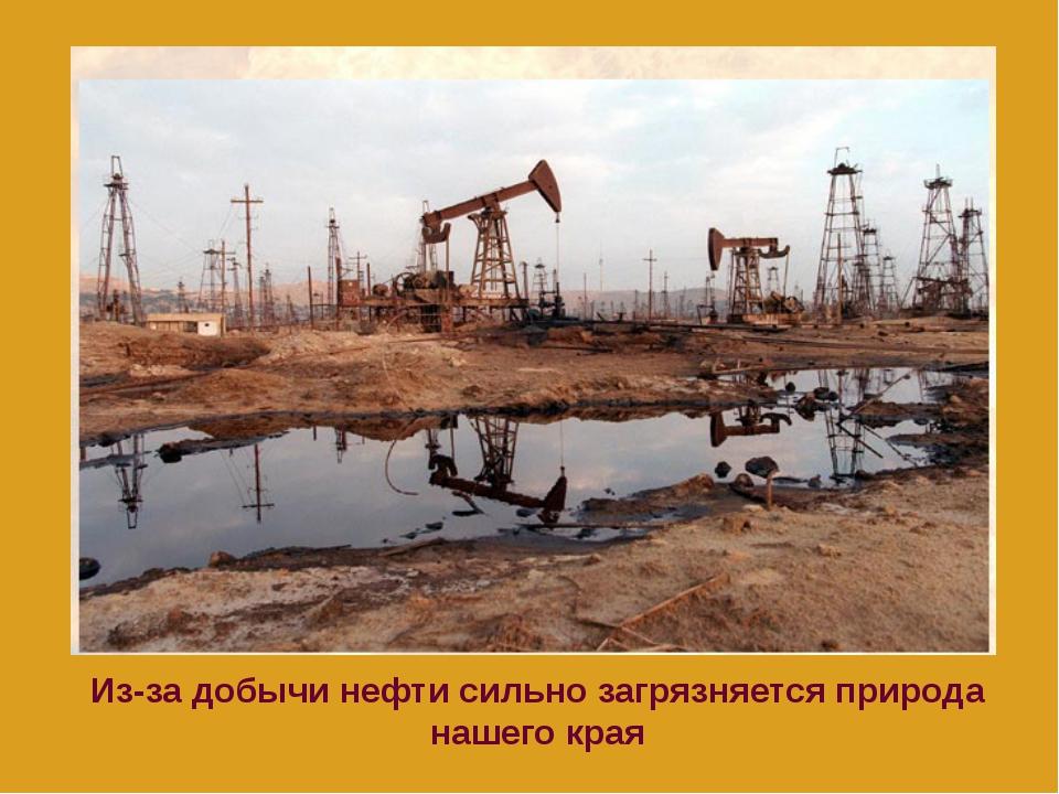 Из-за добычи нефти сильно загрязняется природа нашего края