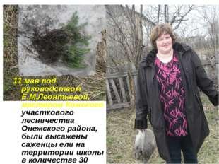 11 мая под руководством Е.М.Леонтьевой, мастером Кожского участкового лесниче