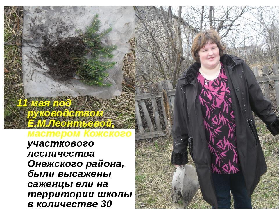 11 мая под руководством Е.М.Леонтьевой, мастером Кожского участкового лесниче...