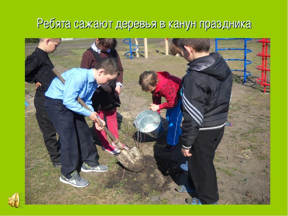 Ребята сажают деревья в канун праздника