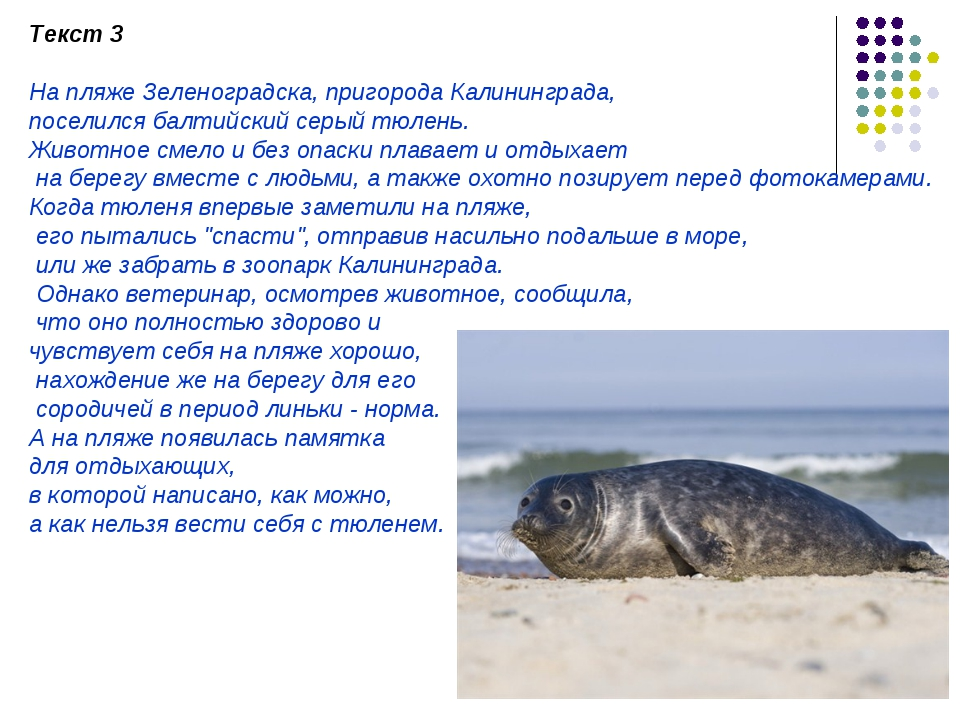 Текст 3 На пляже Зеленоградска, пригорода Калининграда, поселился балтийский...