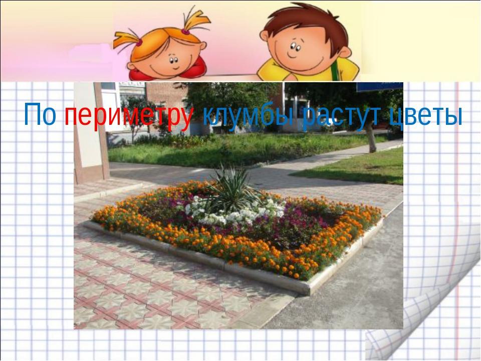 По периметру клумбы растут цветы