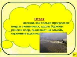 Ответ Весной, как только прогреется вода в заливчиках, вдоль берегов речек