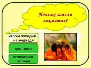 Почему шмели лохматые? для тепла отличаться от пчёл чтобы походить на медведя