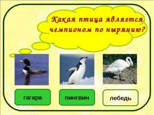 Какая птица является чемпионом по нырянию? пингвин гагара лебедь