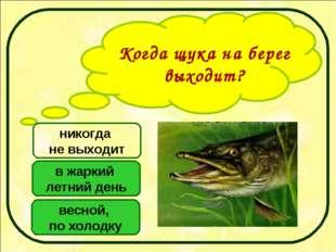 Когда щука на берег выходит? весной, по холодку в жаркий летний день никогда
