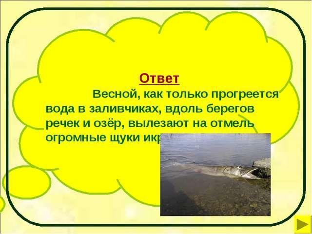 Ответ Весной, как только прогреется вода в заливчиках, вдоль берегов речек...