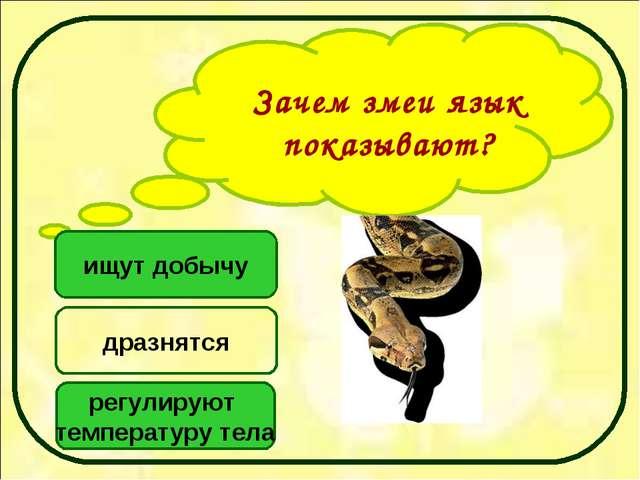 Зачем змеи язык показывают? ищут добычу регулируют температуру тела дразнятся