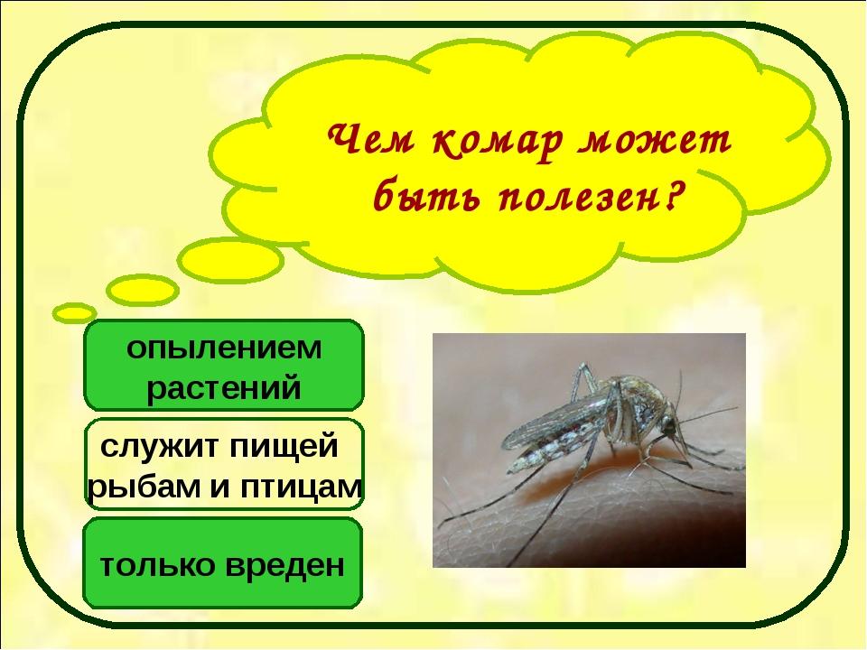 Чем комар может быть полезен? опылением растений только вреден служит пищей р...