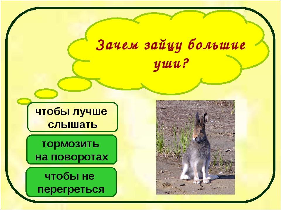 Зачем зайцу большие уши? чтобы не перегреться тормозить на поворотах чтобы лу...