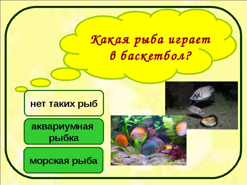 Какая рыба играет в баскетбол? аквариумная рыбка морская рыба нет таких рыб