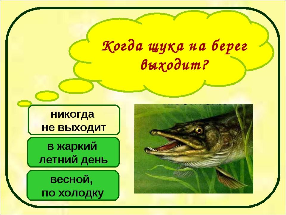 Когда щука на берег выходит? весной, по холодку в жаркий летний день никогда...