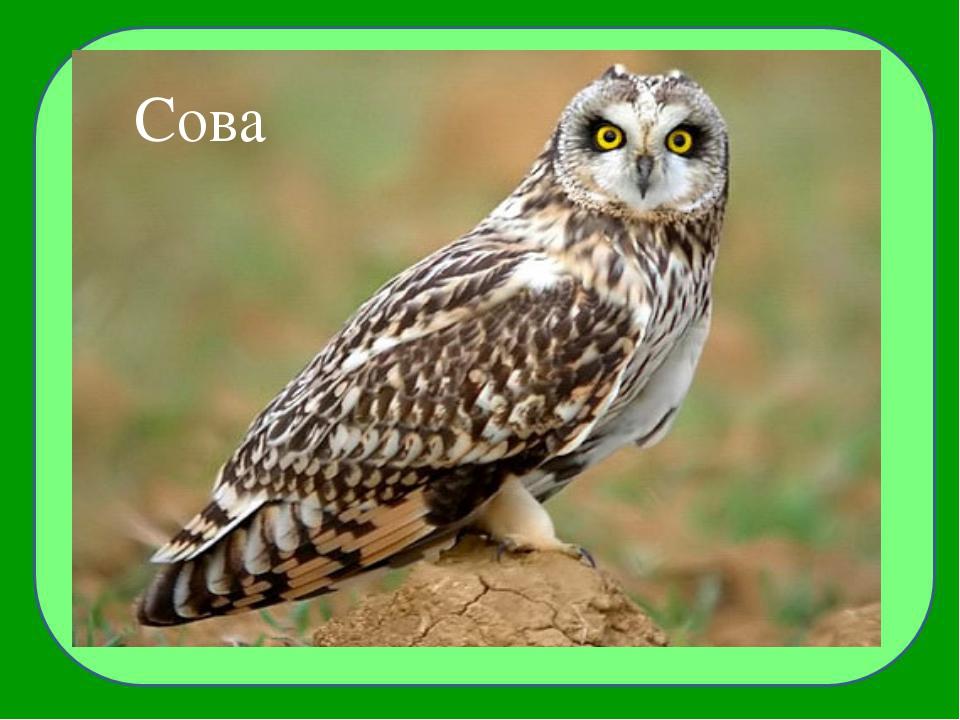 Птица, которая развивает фантастическую скорость 320 км/ч, также быстро ездят...