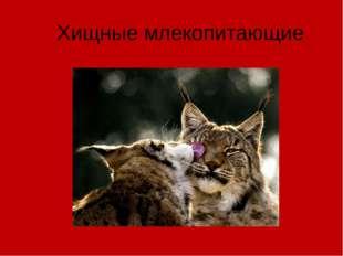 Хищные млекопитающие