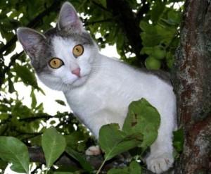 вестибулярный аппарат кошек