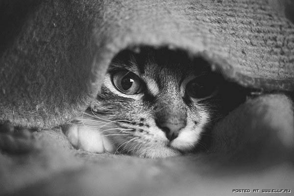 Описание: Красивые фотографии кошек (38 фото)