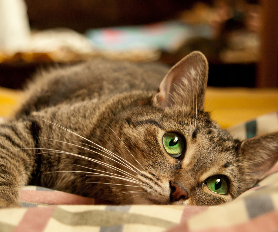 кошка, лежит, глаза, зеленые