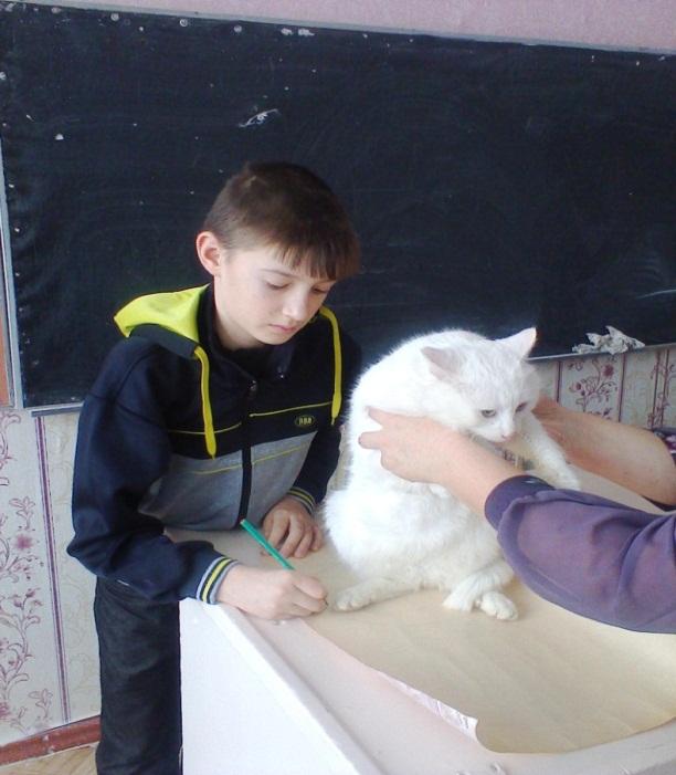 H:\Фото кошка\фото1078.jpg