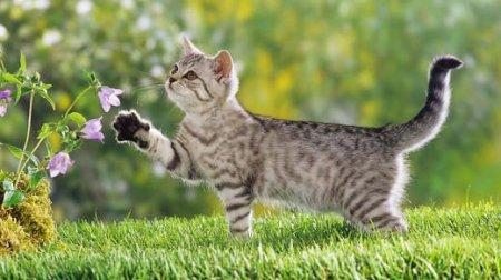 Описание: Болезни кошек