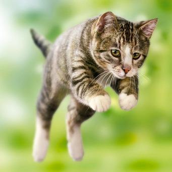 с какой скоростью бегает кошка