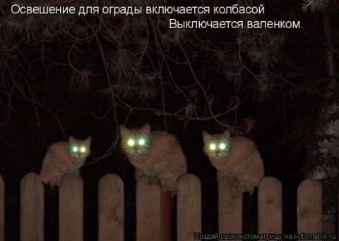 электрификация - кошки - это кошки
