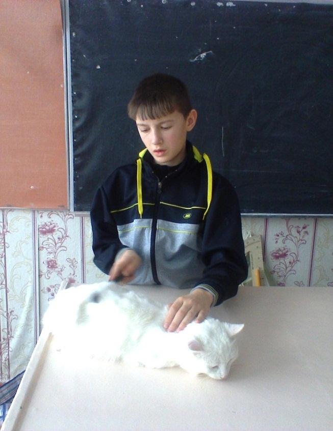 H:\Фото кошка\фото1082.jpg