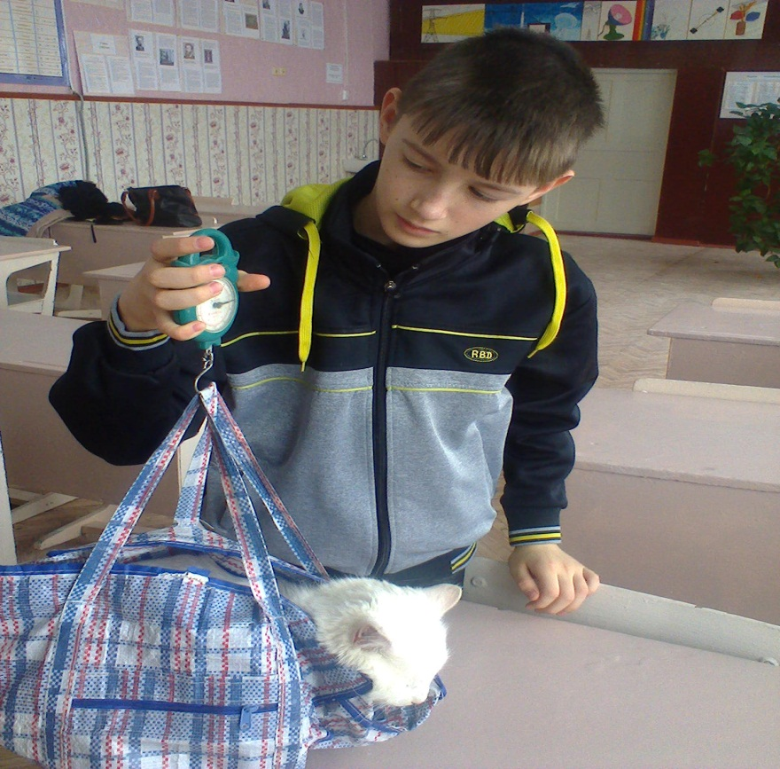 H:\Фото кошка\фото1074.jpg
