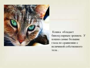 Кошка обладает бинокулярным зрением. У кошки самые большие глаза по сравнени