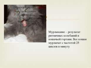 Мурлыкание – результат ритмичных колебаний в кошачьей гортани. Все кошки мур