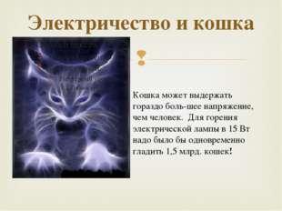 Электричество и кошка Кошка может выдержать гораздо большее напряжение, чем
