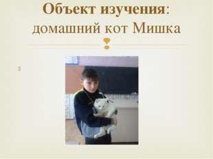 Объект изучения: домашний кот Мишка 