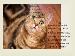 У кошек широкий диапазон слуха - от 3 000 до 60 000 герц, у человека - всего