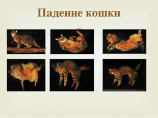 Падение кошки 
