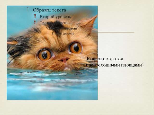 Кошки остаются превосходными пловцами! 