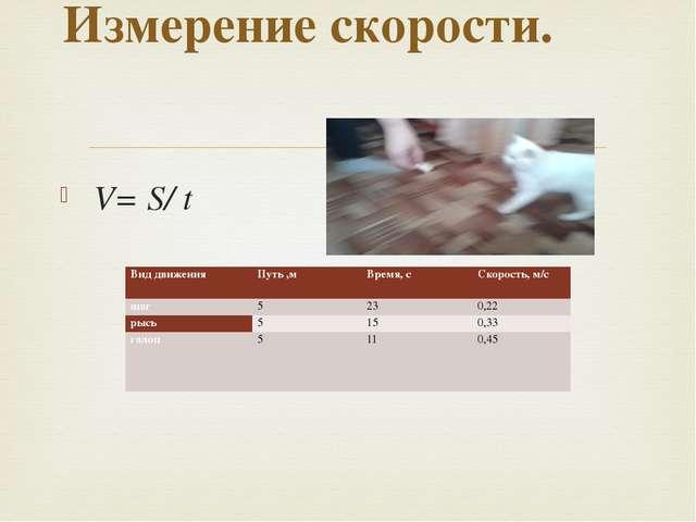 V= S/ t Измерение скорости. Вид движения Путь ,м Время, с Скорость, м/с шаг...