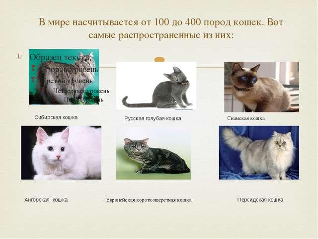 В мире насчитывается от 100 до 400 пород кошек. Вот самые распространенные из...