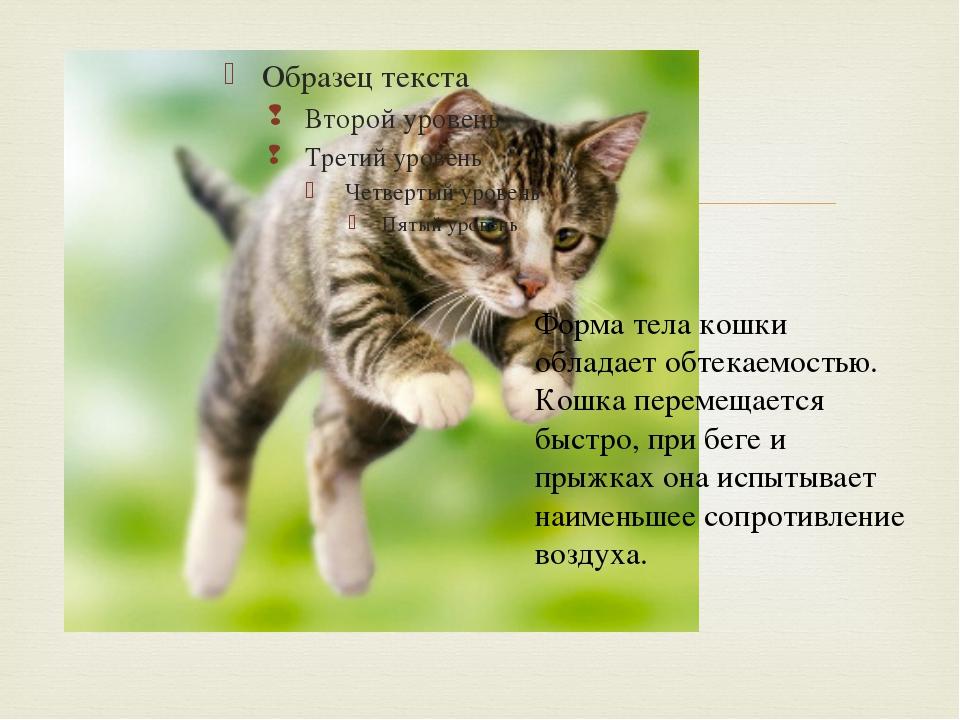 Форма тела кошки обладает обтекаемостью. Кошка перемещается быстро, при беге...