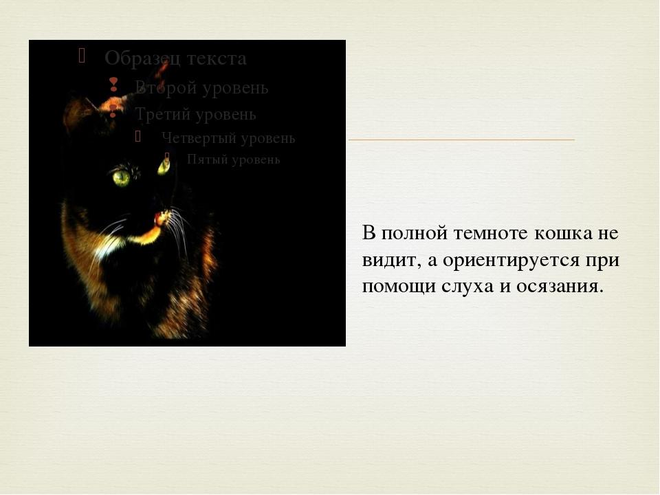 В полной темноте кошка не видит, а ориентируется при помощи слуха и осязания...