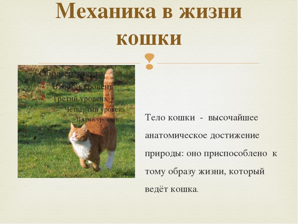 Механика в жизни кошки Тело кошки - высочайшее анатомическое достижение приро...