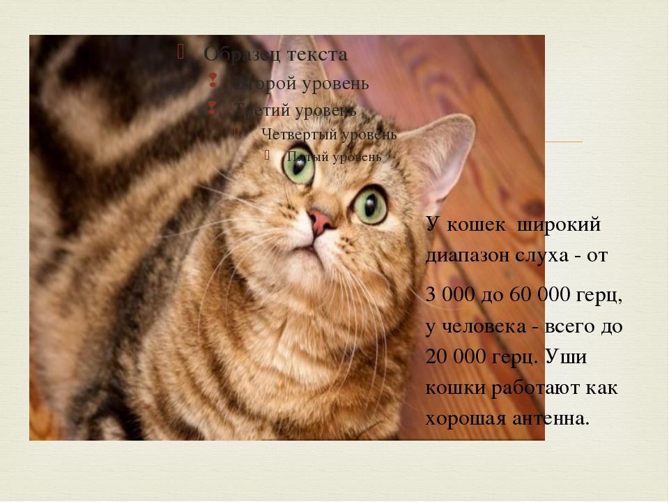 У кошек широкий диапазон слуха - от 3 000 до 60 000 герц, у человека - всего...