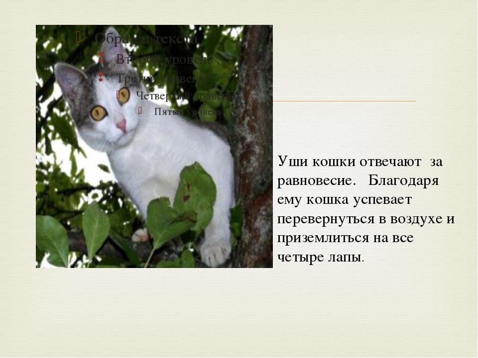 Уши кошки отвечают за равновесие. Благодаря ему кошка успевает перевернуться...