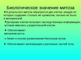 Биологическое значение митоза В результате митоза образуются две клетки, каж
