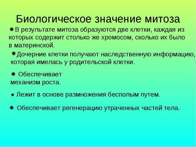 Биологическое значение митоза В результате митоза образуются две клетки, каж...