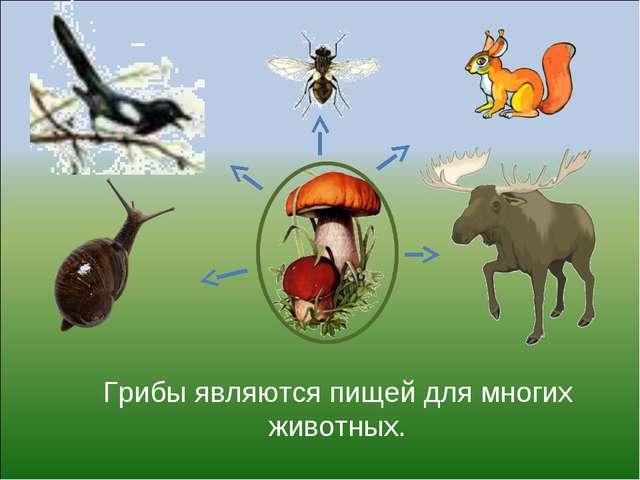 Грибы являются пищей для многих животных.