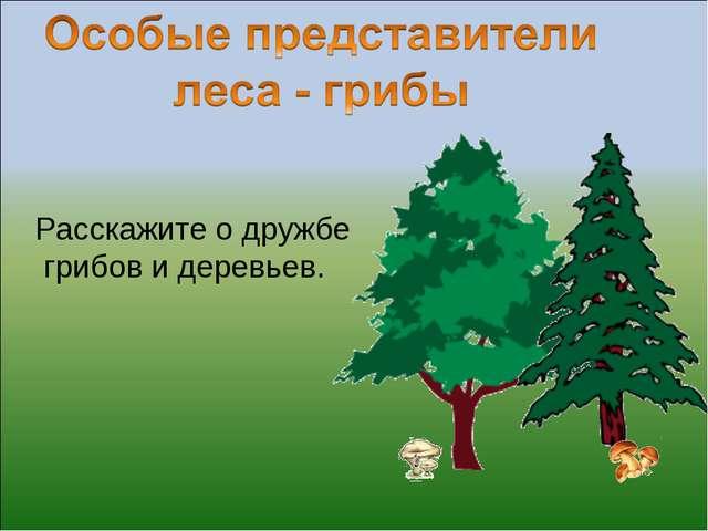 Расскажите о дружбе грибов и деревьев.